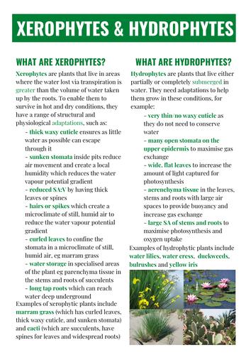 OCR ALEVEL BIOLOGY XEROPHYTES & HYDROPHYTES
