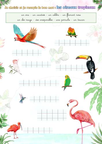 Handwriting (French): Tropical birds (les oiseaux tropicaux)