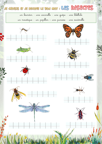 Handwriting (French) - Choose the right word: insects