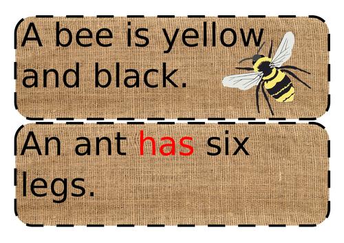 Bug/minibeast simple sentences EYFS