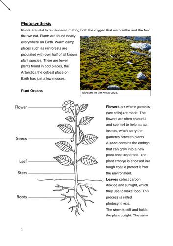 GCSE Photosynthesis Booklet