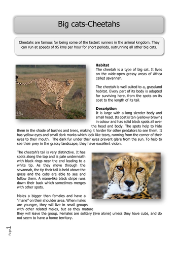 Wild Animals -KS2  guided reading