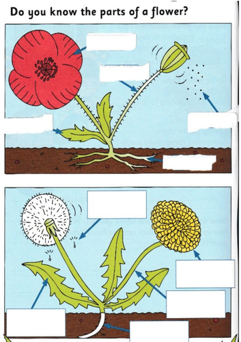 Label the parts of a flower worksheet