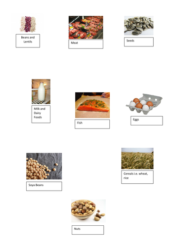Protein (Nutrition) - 7 Hour Fully Resourced Unit of Work