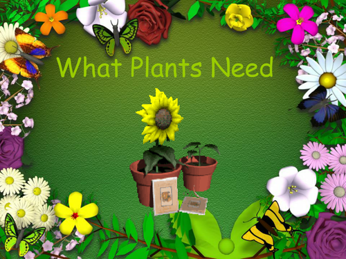 What Plants Need An Iwb Presentation 3005595 on Parts Of A Plant Worksheet Kindergarten
