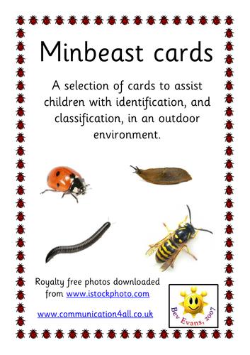 Minibeast Identification Cards By Bevevans22 Teaching