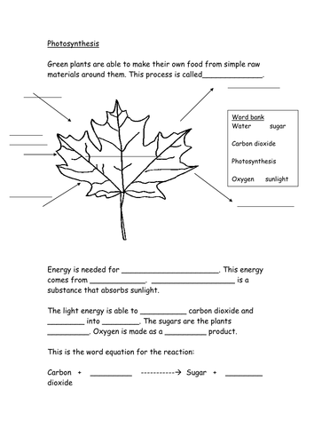 Photosynthesis worksheet by hazcard - Teaching Resources - Tes