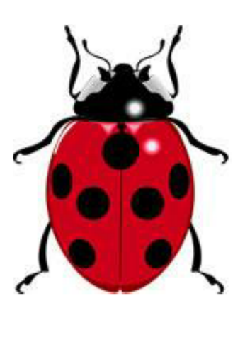 ladybird spots - number bonds to 10