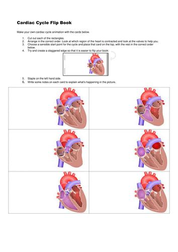 Cardiac cycle flip book
