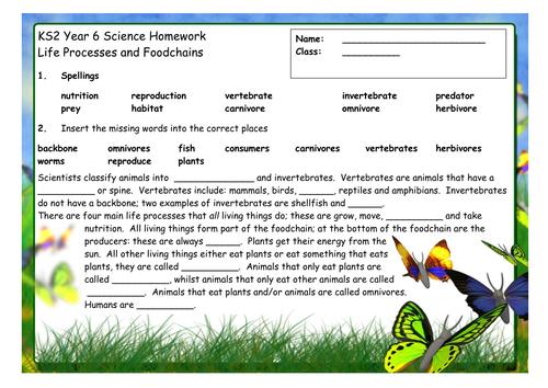 Foodchains homework worksheet