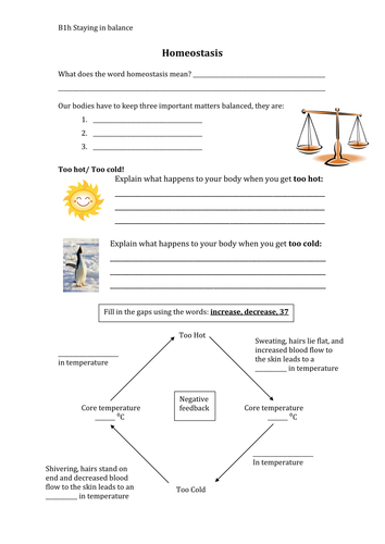 Homeostasis worksheet by smcdonnell1 - Teaching Resources - Tes