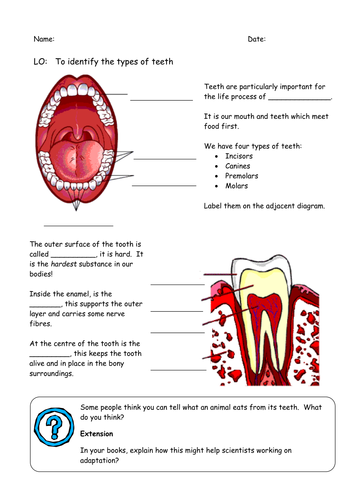 Teeth Worksheet By Sueemc Teaching Resources Tes