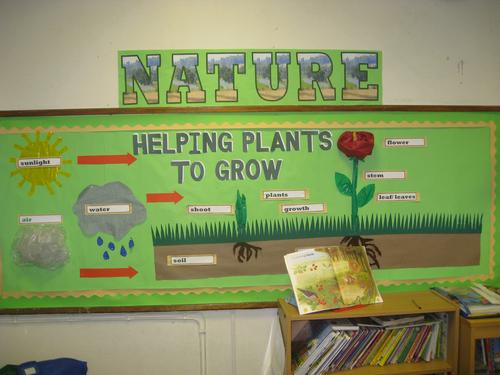 Science Display-Year 3- Plants