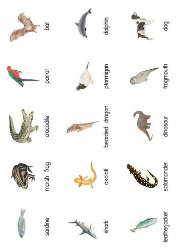 Classification of Vertebrates Card Sort