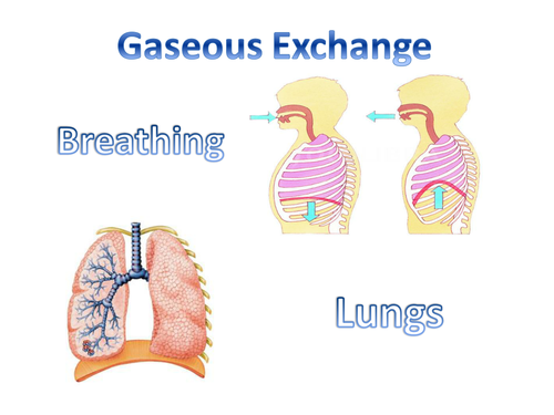 Breathing and our lungs by jenstanley teaching resources tes ccuart Images