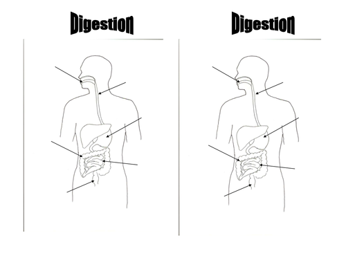 Simple digestion diagram to label by jkmoss teaching resources tes ccuart Choice Image