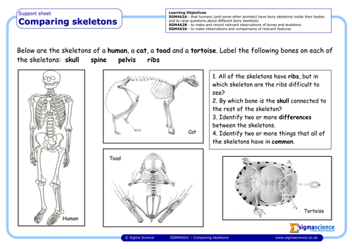 sgm4as01 comparing skeletons by sigmascience teaching resources. Black Bedroom Furniture Sets. Home Design Ideas