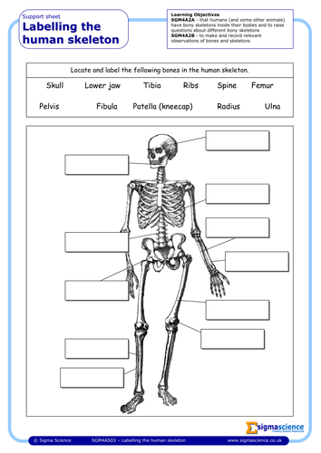 sgm4as03 labelling the human skeleton by sigmascience teaching resources tes. Black Bedroom Furniture Sets. Home Design Ideas