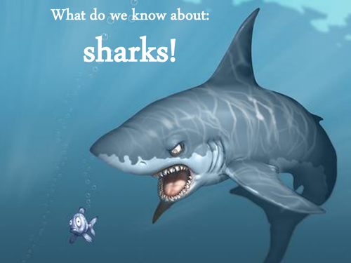 Sharks information Power point