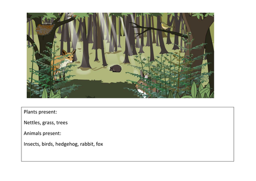 Woodland Ecosystem sheet HT