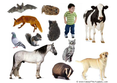 night and day animals sorting (nocturnal)