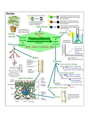 AQA B2 Photosynthesis summary