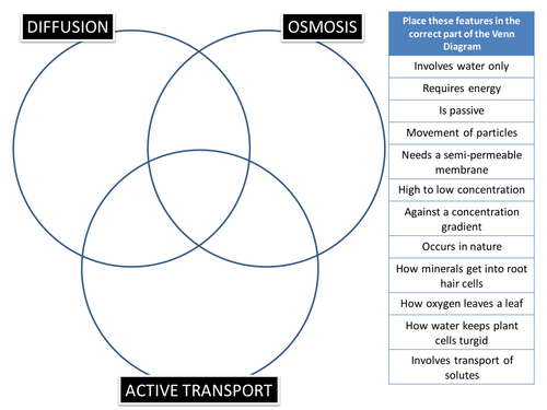 DiffusionOsmosisActive Transport Venn Puzzle by BioGas66 – Active Transport Worksheet