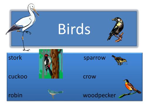 Birds power point