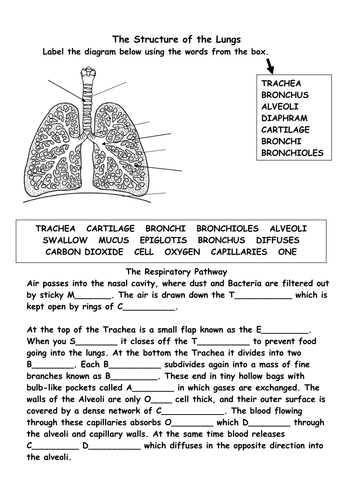 Worksheet Respiratory System Worksheets structure of the respiratory system by bs99amb teaching resources tes