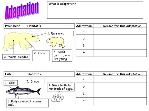 adaptation worksheet polar bear fish and cactus by teach biology teaching resources tes. Black Bedroom Furniture Sets. Home Design Ideas
