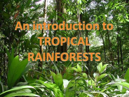 rainforest introduction powerpoint ks2 by kayemisodi teaching