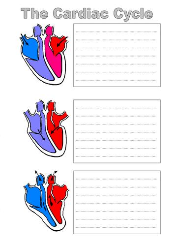 Cardiac Cycle Worksheet - Khayav