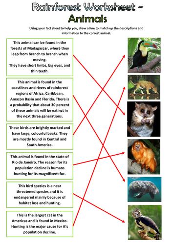 Rainforest Animals Pack