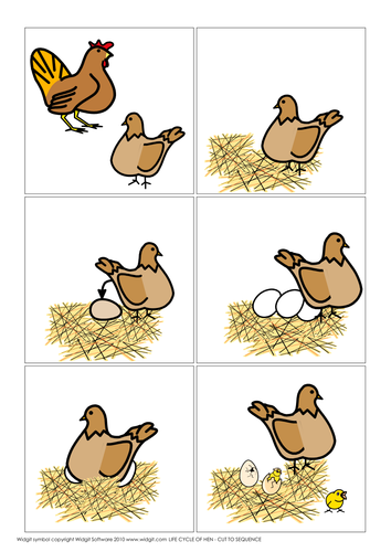 Bird vocabulary and life cycle of hen (Widgit CIP)