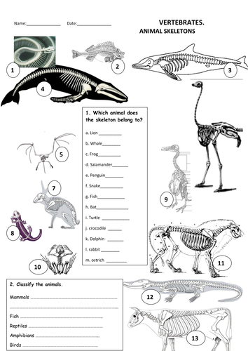 animals skeletons by maytechuna teaching resources. Black Bedroom Furniture Sets. Home Design Ideas