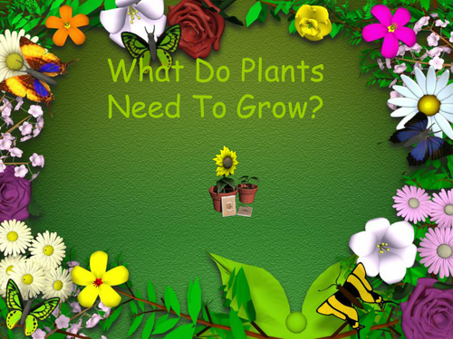 Powerpoint Growing Plants Seeds Fruit 6061939 on Kindergarten Planting Seeds Worksheets