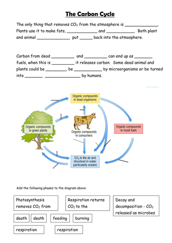 Gcse carbon cycle a4 poster to label sample worksheet by carbon cycle ccuart