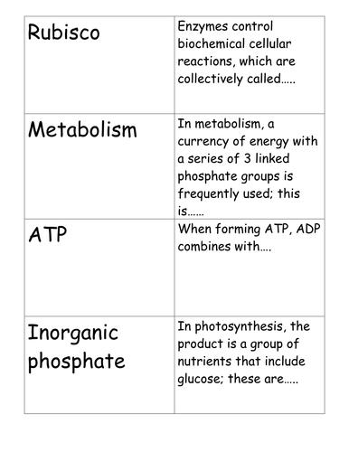 Photosynthesis Cellular Respiration Venn Diagram By Hstewart05