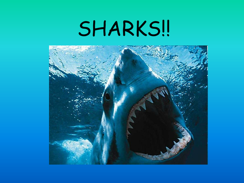 Sharks Powerpoint By Kez1985 Teaching Resources Tes
