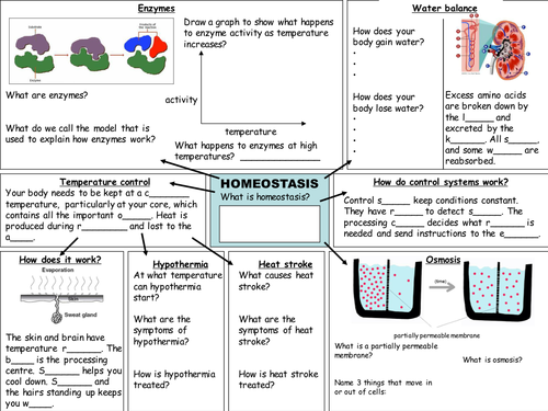 21st Century B4 C4 P4 Revision Worksheets By Deb1977