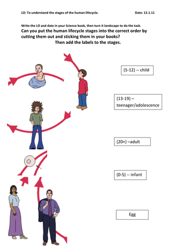 Human life cycle worksheet year 5 livinghealthybulletin human life cycle by amusty teaching resources tes ibookread