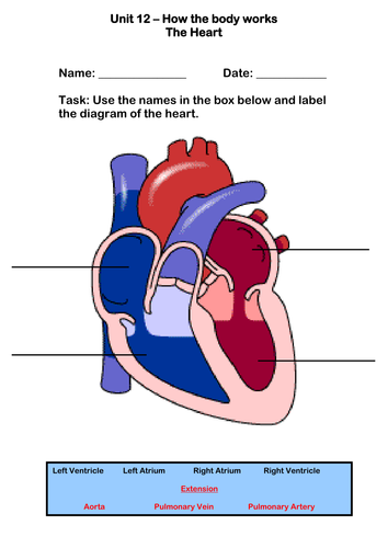 The Human Heart Worksheet by robbirdy84 - Teaching Resources - TES