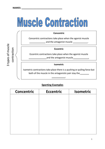 Muscle Contractions Worksheet by beckie_shank - Teaching Resources - Tes