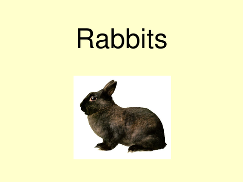 Rabbits powerpoint book
