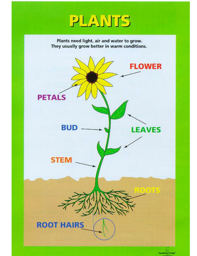 Parts of a plant by spl5fm teaching resources tes ccuart Images