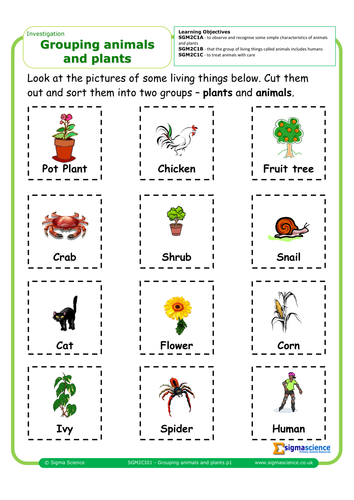 sgm2ci01 grouping animals and plants by sigmascience teaching resources. Black Bedroom Furniture Sets. Home Design Ideas
