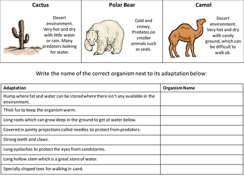 Printables Animal Adaptations Worksheets animal adaptation worksheet davezan worksheets davezan