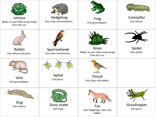 Food web card sort or cut and stick by hannahradford Teaching – Food Chain and Food Web Worksheet