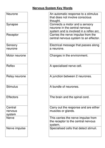 Worksheet Nervous System Worksheet nervous system key words worksheet by bobfrazzle teaching resources tes