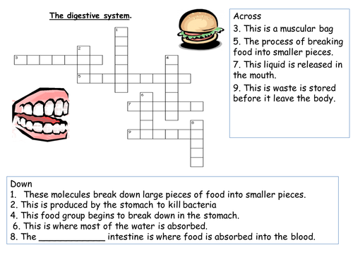 The digestive system crossword by ranjali Teaching Resources Tes – Digestive System Worksheet High School